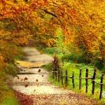 秋のおさんぽ瞑想【ちょこっと瞑想③】
