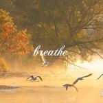 視点を変えた呼吸のお話