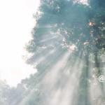 慈悲の瞑想【ちょこっと瞑想⑤】