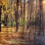 季節の変わり目の過ごし方~秋から冬~