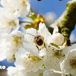 ぷち漢方ライフ~花粉の季節の漢方茶