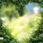 ヨガの世界から見る「愛」